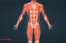 anatomy-and-psychology-of-human-230×150