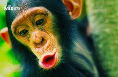 most-fascinating-monkeys-on-eart-230×150